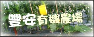 豐安有機農場:有機蔬果(轉型期)